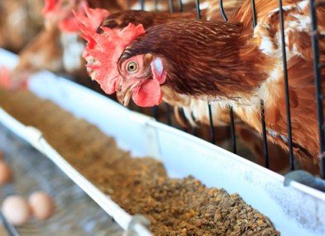 В Приморье птицефабрики остались без кормов