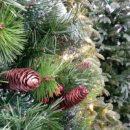 11 мобильных групп следят за законностью заготовки новогодних елей в Приморье