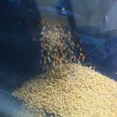 В Приморье первый урожай собрал новый сельскохозяйственный комплекс