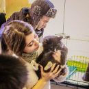 Во Владивостоке искали хорошие руки для котят