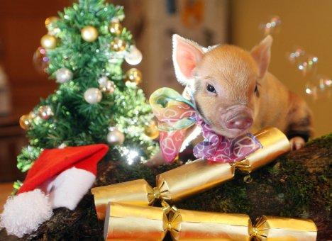 Гороскоп на 2019 год: Свинья манит пятаками...