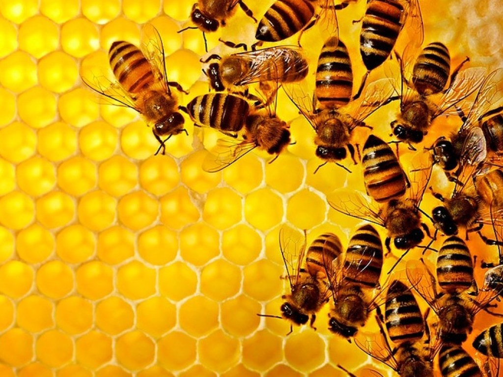 Пчелиные семьи любят тепло и комфорт