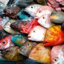 Рыбный рынок: Вы стройте, рыба будет!