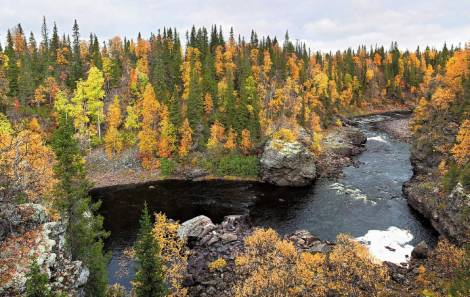 С 1 июля Россия начнет терять защитные леса и рыбные ресурсы