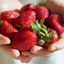 Японцы будут выращивать клубнику и помидоры на острове Русском
