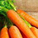 Первая партия приморской моркови отправляется в Японию
