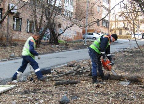 В Покровском мемориальном парке Владивостока приступила к работе бензопила