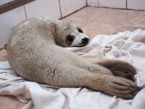 Новый дом для реабилитации морских млекопитающих возводят в Приморье