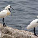 Редчайшая птица мировой орнитофауны поселилась в Приморье