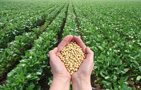 Сельское хозяйство Приморья остается на бобах
