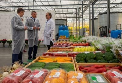 На Сахалине планируют построить еще 6 гектаров теплиц