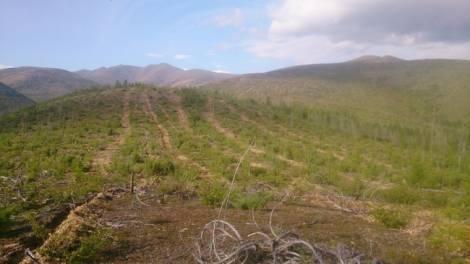 В 2019 году в Магаданской области восстановят около 400 гектаров леса