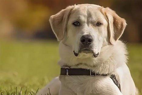 Утвержденный список опасных пород собак сократили с 69 до 12