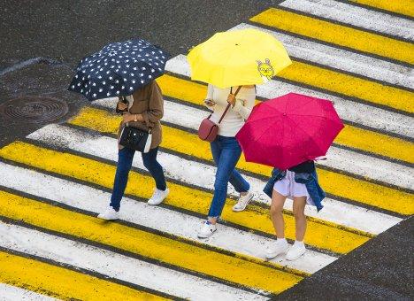 Мэр Владивостока просит сократить рабочий день из-за ожидаемого сильного дождя