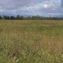 На Камчатке планируется создать первый в России центр по восстановлению популяции кречетов
