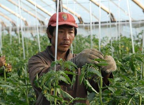 Китайцев выгоняют с полей Приморья