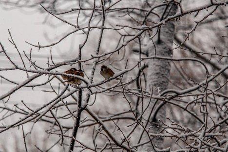 Зимние пейзажи последнего месяца осени