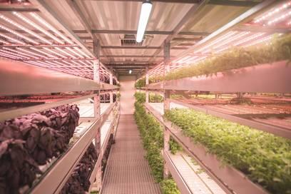 Тепличный комплекс по технологии вертикальной фермы вырос на Камчатке