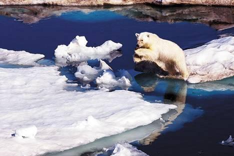 Проект об основах госполитики в Арктике внесен в Правительство России