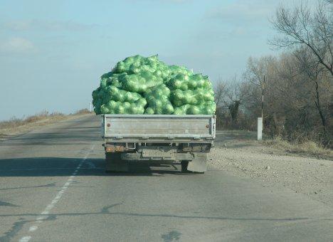 Приморью овощной голод не грозит