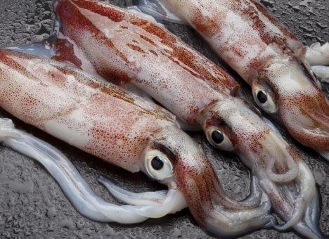 Приморский кальмар корейского улова