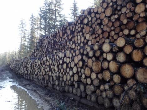 В Хабаровском крае рухнул очередной лесопромышленный гигант