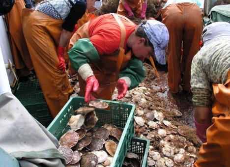 Приморские морепродукты с китайским привкусом