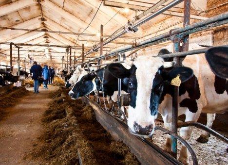 Сельское хозяйство в Приморье продолжает разваливаться