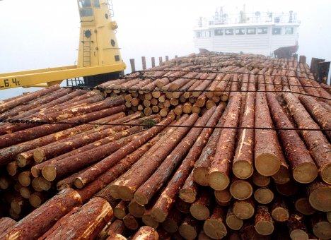 В Приморье начали торговать лесом на экспорт