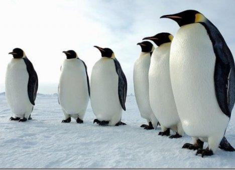 МТС запустила сотовую связь для пингвинов