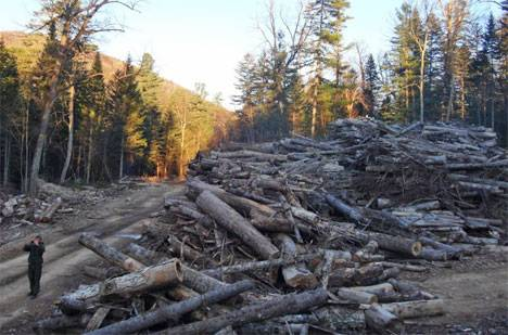 Проверка качества лесоуправления в Приморье помогла выявить пробелы в законодательстве