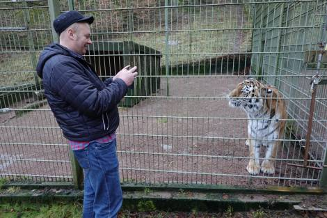 Тигрица Спарта встретилась со своим спасителем в зоопарке Nordens Ark