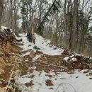 Варварские рубки леса в Приморье шли буквально на глазах у местных жителей