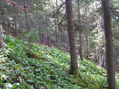 Более 110 000 га уникальных лесных экосистем на юге Дальнего Востока получили спасительный статус