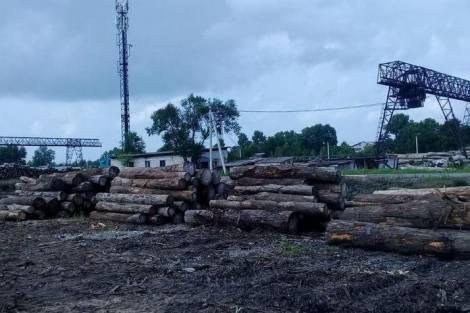 Лесная отрасль Хабаровского края ушла в штопор