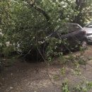 Во Владивостоке дерево упало сразу на несколько автомобилей