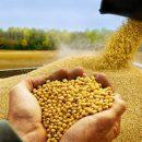 В Приморье китайцы построят современный завод по глубокой переработке сои