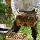 Хабаровский край поддержит пчеловодство