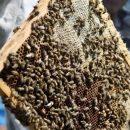 Памятник пчеле установят в Приморье на