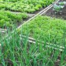 Сады и огороды получают новую кадастровую оценку