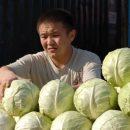 Приморские поля стонут без китайских и узбекских рук
