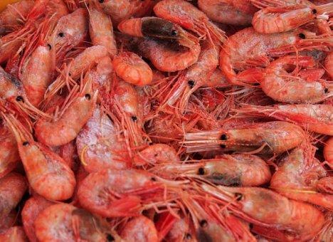 Производство аквакультуры увеличилось в Приморье на 65%