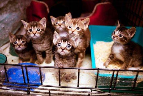 Жители Владивостока разбирают бездомных кошек