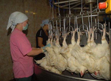 В модернизацию единственной птицефабрики в Приморье вложат миллиарды рублей