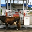 Правительству нажаловались на высокие цены на топливо в ДФО