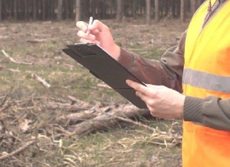 Специалисты проверили площадку НЗМУ в Находке и не нашли редких деревьев