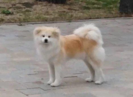 У Олега Кожемяко пропала собака