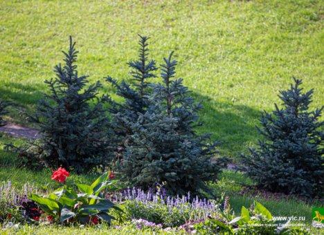 9 000 кустарников и деревьев высадят во Владивостоке