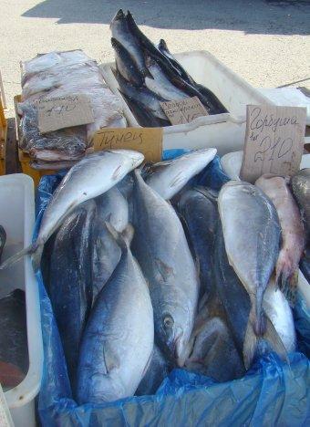 Надо ли бояться рыб?