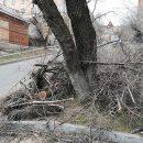 Зачем Владивостоку деревья?
